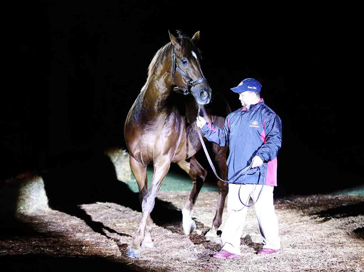 stallion5