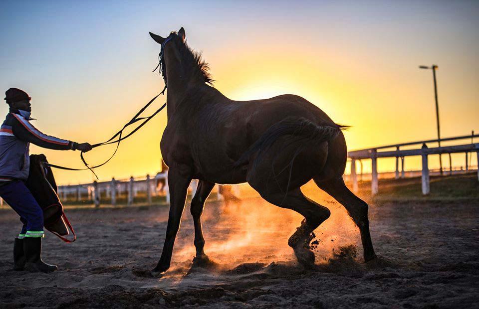 horsesunrise